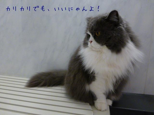 猫 番頭_e0237625_105262.jpg