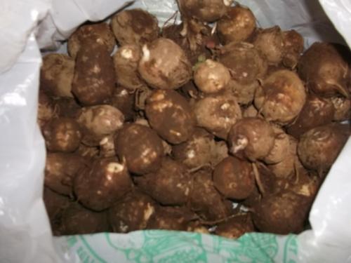里芋の保存..._b0137932_13505354.jpg