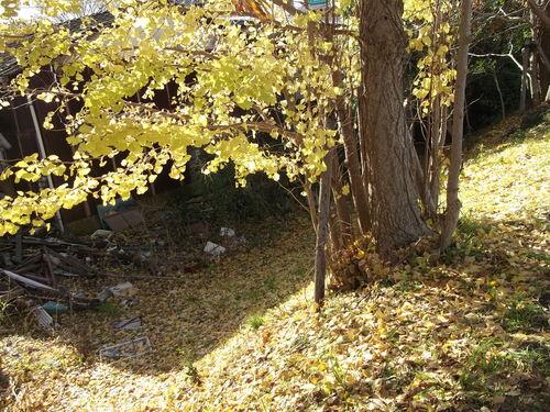 年末に小さな秋を見つけました、_b0137932_22112096.jpg