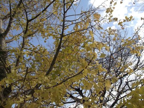 年末に小さな秋を見つけました、_b0137932_22121064.jpg