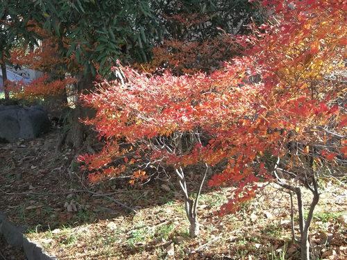 年末に小さな秋を見つけました、_b0137932_22131882.jpg