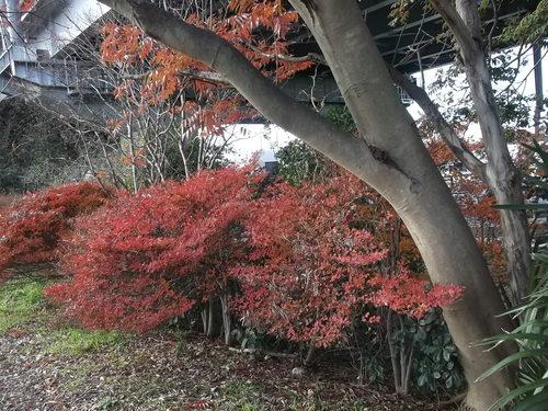 年末に小さな秋を見つけました、_b0137932_22141038.jpg