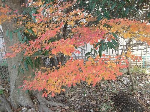 年末に小さな秋を見つけました、_b0137932_22162042.jpg