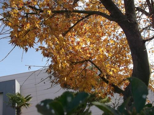 年末に小さな秋を見つけました、_b0137932_22185225.jpg