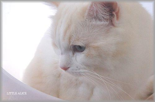ぐぅちゃん借りてきた猫になる、の巻。_c0080132_14305717.jpg