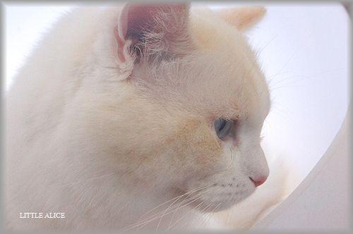 ぐぅちゃん借りてきた猫になる、の巻。_c0080132_14311333.jpg