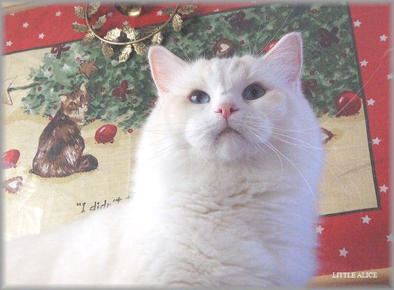 ぐぅちゃん借りてきた猫になる、の巻。_c0080132_1433382.jpg