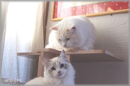 ぐぅちゃん借りてきた猫になる、の巻。_c0080132_14341377.jpg