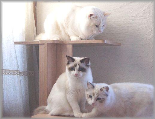 ぐぅちゃん借りてきた猫になる、の巻。_c0080132_14343174.jpg