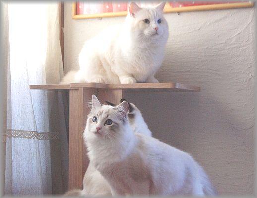 ぐぅちゃん借りてきた猫になる、の巻。_c0080132_14345117.jpg