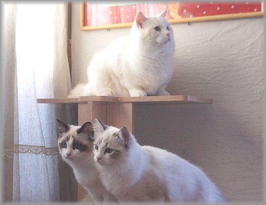 ぐぅちゃん借りてきた猫になる、の巻。_c0080132_143578.jpg