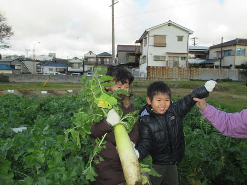 大根の収穫です(^o^)_f0079749_13454781.jpg