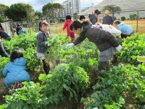 大根の収穫です(^o^)_f0079749_13535879.jpg