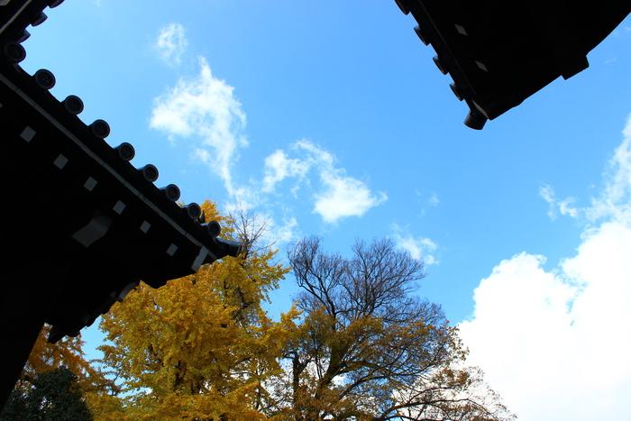 京都御苑_e0232054_19524458.jpg