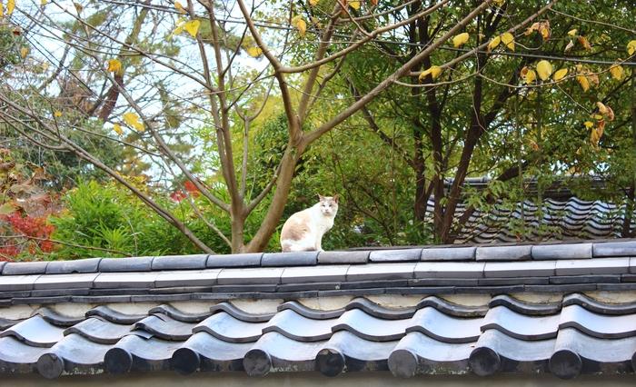 京都御苑_e0232054_2113567.jpg