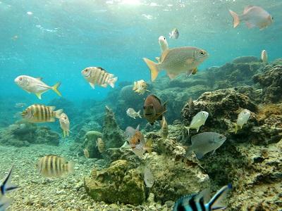 沖縄で初ダイビング!_a0156273_12164457.jpg