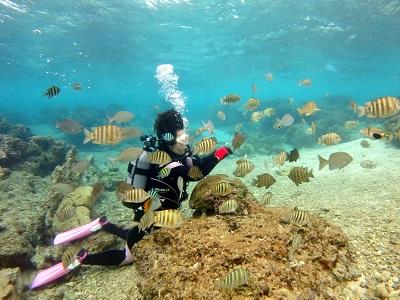 沖縄で初ダイビング!_a0156273_1227798.jpg