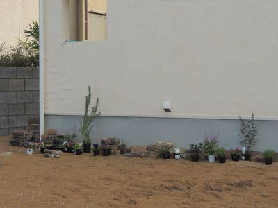 庭にいろいろと植えこんでみました♪_c0274374_15572870.jpg