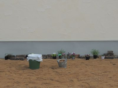 庭にいろいろと植えこんでみました♪_c0274374_15574247.jpg