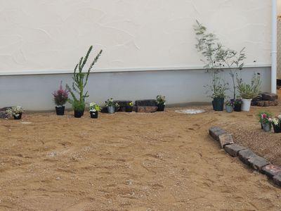 庭にいろいろと植えこんでみました♪_c0274374_15575648.jpg
