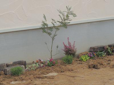 庭にいろいろと植えこんでみました♪_c0274374_1621931.jpg