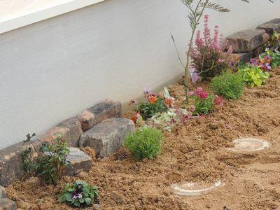 庭にいろいろと植えこんでみました♪_c0274374_1623153.jpg
