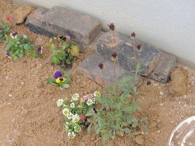 庭にいろいろと植えこんでみました♪_c0274374_1624495.jpg