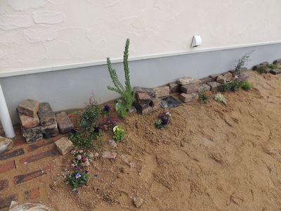 庭にいろいろと植えこんでみました♪_c0274374_162575.jpg