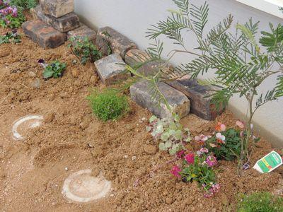 庭にいろいろと植えこんでみました♪_c0274374_1625991.jpg