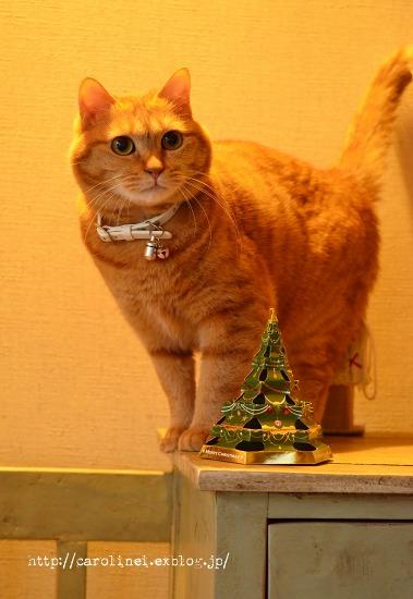 ハンガリーのクリスマスベル_d0025294_13241141.jpg