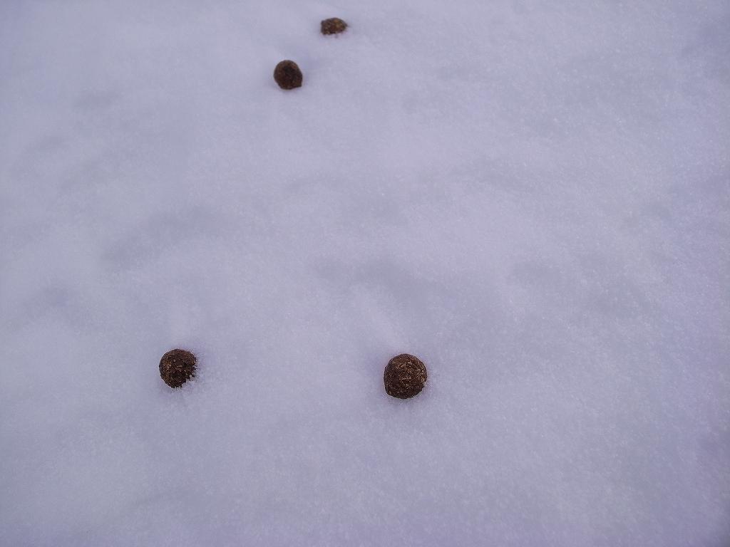 12月20日、樽前山-樽前山東山から西山へ、そして下山-_f0138096_20122632.jpg