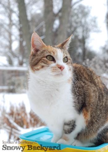 雪の積もった裏庭で_b0253205_36411.jpg
