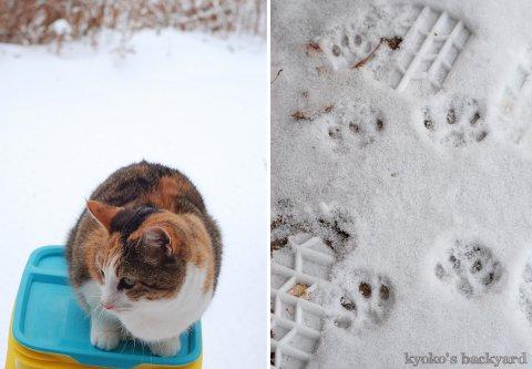 雪の積もった裏庭で_b0253205_374721.jpg