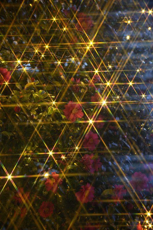 クリスマスイルミネーション@京セラ本社 其の二_f0032011_17451649.jpg