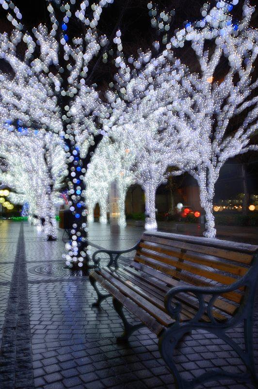 クリスマスイルミネーション@京セラ本社 其の二_f0032011_1746497.jpg