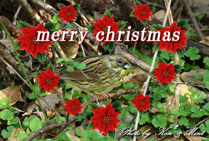 メリークリスマス♪ (*^^*) は明日~♪_e0218518_2212332.jpg