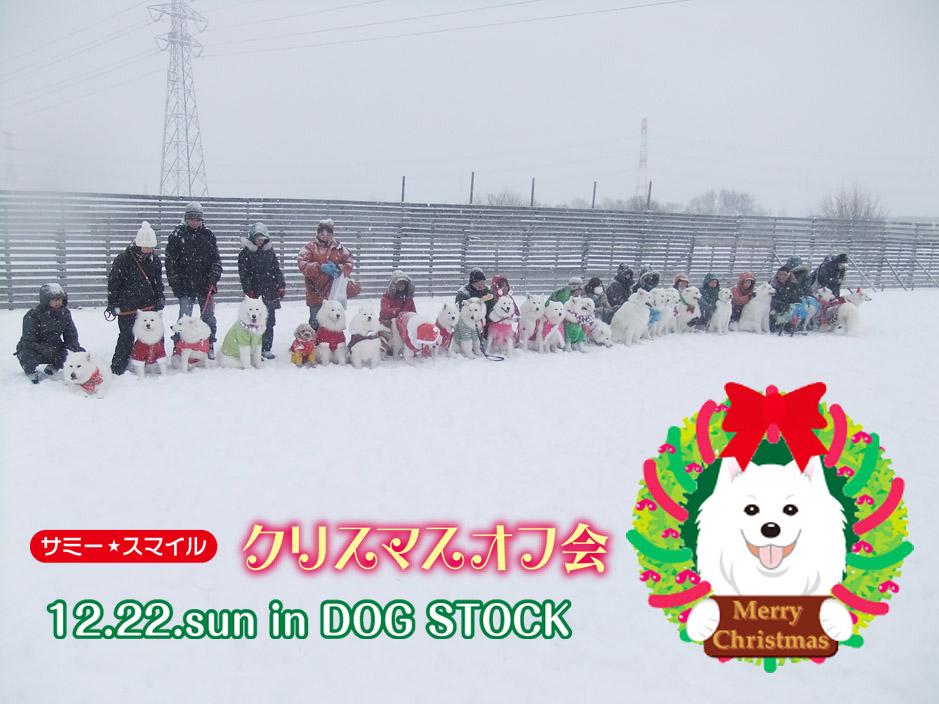 2013クリスマスオフ会無事終了_a0044521_19174754.jpg