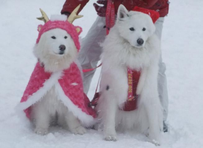 2013クリスマスオフ会無事終了_a0044521_19425072.jpg