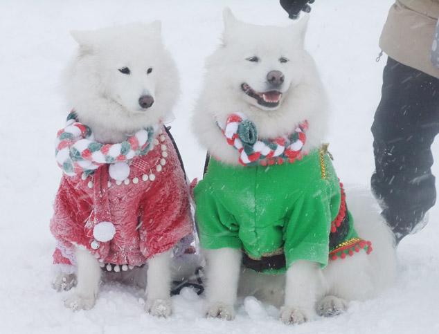 2013クリスマスオフ会無事終了_a0044521_19533390.jpg