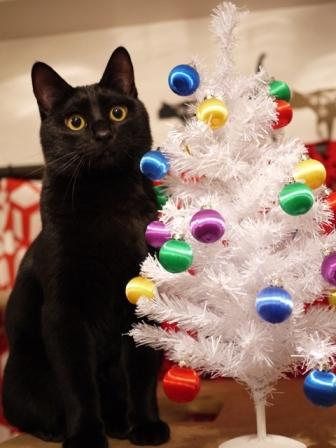 クリスマスイヴイヴ猫 ぎゃぉす編。_a0143140_20363357.jpg