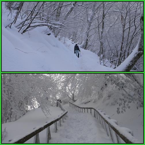 雪の英彦山・四王寺の滝_e0164643_16503142.jpg