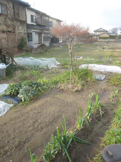 久しぶりの晴れ間に収穫、収穫~_e0121558_21175690.jpg