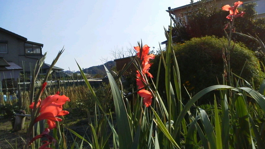 小春日和は外へ出る_c0108460_17335736.jpg