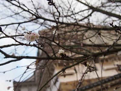 師走の桜の白鷺城_a0131787_1054165.jpg
