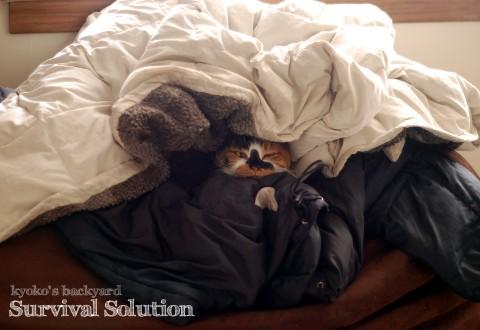 寒がり猫の、寒さ対策?_b0253205_1382691.jpg