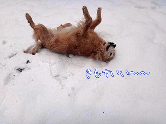 メリークリスマス_f0064906_1644058.jpg