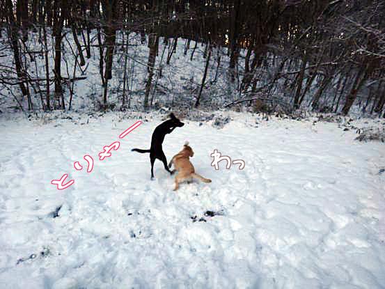 メリークリスマス_f0064906_1646251.jpg