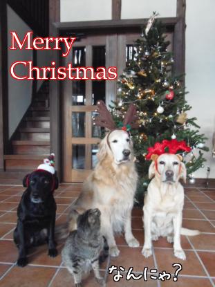 メリークリスマス_f0064906_1762229.jpg