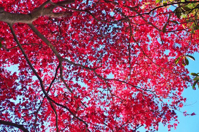 佐野市 唐沢山神社の紅葉1_a0263109_14495069.jpg