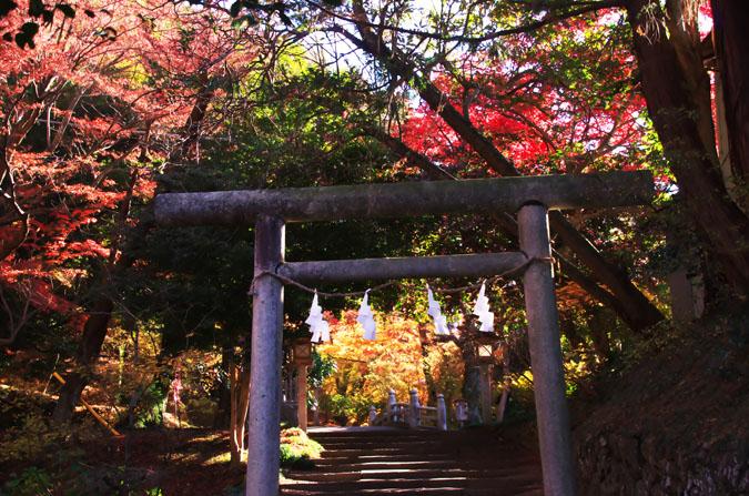 佐野市 唐沢山神社の紅葉1_a0263109_1449789.jpg